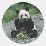 Panda Eating Round Stickers