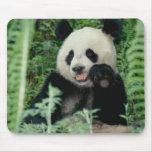 Panda el bosque, Wolong, Sichuan, China Alfombrillas De Raton
