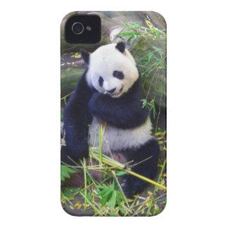 Panda en el parque zoológico de San Diego iPhone 4 Carcasa