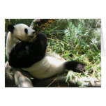 Panda en el parque zoológico de San Diego Tarjetón