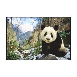 Panda en la montaña envuelta impresiones de lienzo
