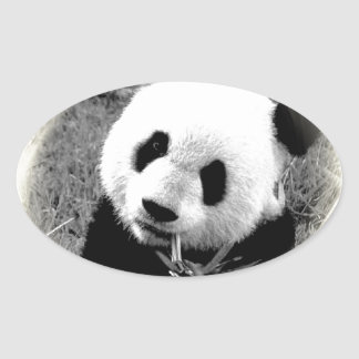 Panda Eyes Oval Sticker