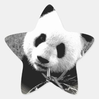 Panda Eyes Star Sticker