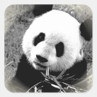 Panda Eyes Square Sticker