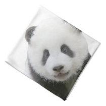 Panda Face Bandana