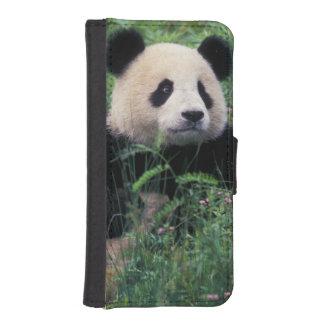 Panda gigante en la hierba, valle de Wolong, Fundas Billetera De iPhone 5