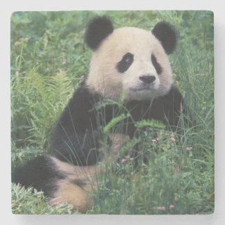 Panda gigante en la hierba, valle de Wolong, Sichu Posavasos De Piedra
