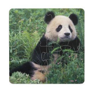 Panda gigante en la hierba, valle de Wolong, Sichu Posavasos De Puzzle