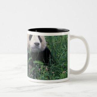 Panda gigante en la hierba valle de Wolong Sichu Taza