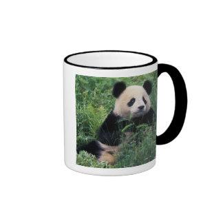 Panda gigante en la hierba, valle de Wolong, Taza De Dos Colores