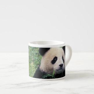 Panda gigante en la hierba, valle de Wolong, Taza Espresso