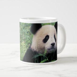 Panda gigante en la hierba, valle de Wolong, Taza Grande