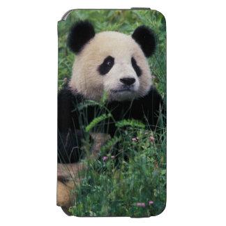 Panda gigante en la hierba, valle de Wolong, Funda Cartera Para iPhone 6 Watson