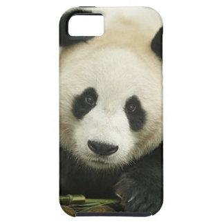 """Panda gigante "" iPhone 5 Protectores"