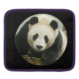 """Panda gigante "" Manga De iPad"