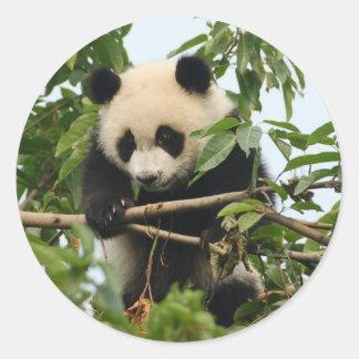 Panda gigante joven - pegatinas pegatina redonda