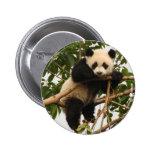 Panda gigante joven pin