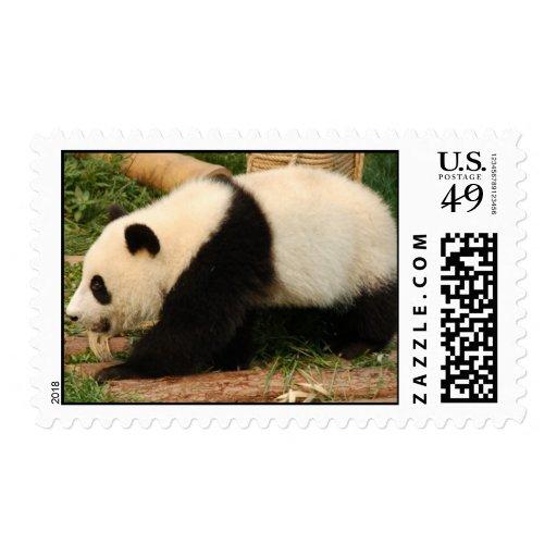 Panda gigante joven sello