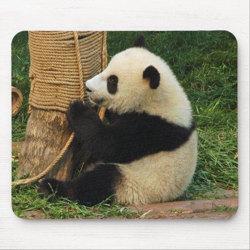 Panda. gigante joven tapetes de ratón