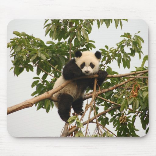 Panda gigante joven alfombrillas de ratones