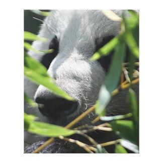 Panda gigante lona envuelta para galerias