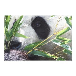 Panda gigante impresiones en lona estiradas