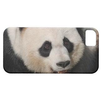 Panda gigante linda iPhone 5 Case-Mate protectores