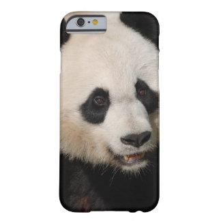 Panda gigante linda funda de iPhone 6 barely there
