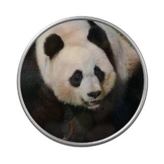Panda gigante linda jarrones de caramelos