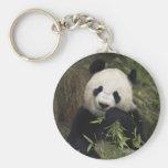 Panda gigante linda llavero personalizado