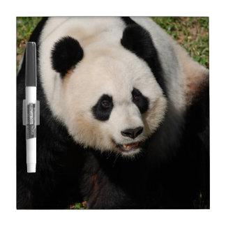 Panda gigante linda pizarras