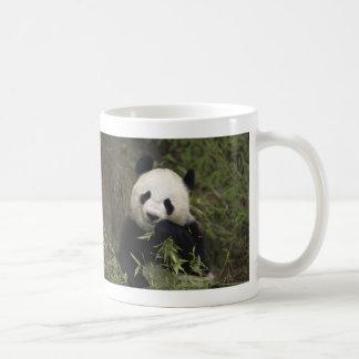 Panda gigante linda taza de café