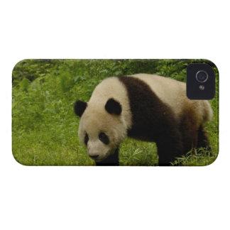 Panda gigante (melanoleuca del Ailuropoda) en su iPhone 4 Protector