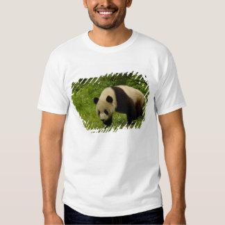 Panda gigante (melanoleuca del Ailuropoda) en su Remera