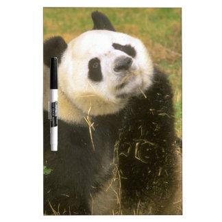 Panda gigante pizarra