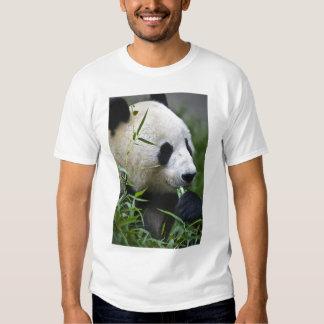 Panda gigante playeras