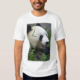 Panda gigante poleras