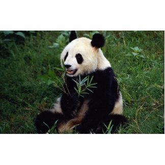 Panda gigante, provincia de Sichuan, China Esculturas Fotográficas