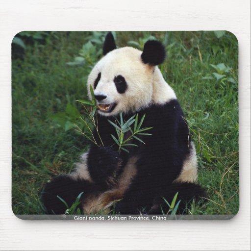 Panda gigante, provincia de Sichuan, China Tapete De Ratón