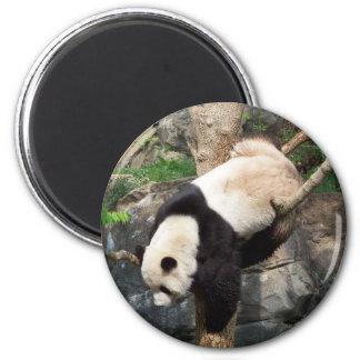 Panda gigante que sube abajo el árbol imán redondo 5 cm