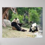 Panda gigante y bambú póster