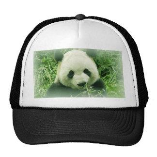 Panda Gorras