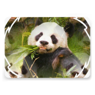 Panda Habitat Personalized Invitations
