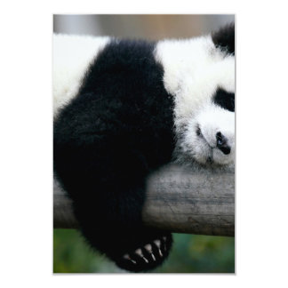 Panda Hugging Post Card
