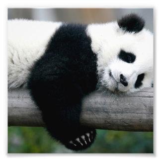 Panda Hugging Post Photo Print