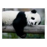Panda Hugging Post Stationery Note Card