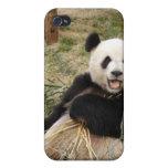 Panda i iPhone 4 protector