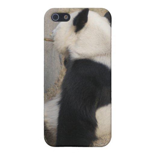 Panda i iPhone 5 carcasa