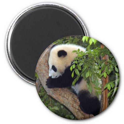 Panda Imán De Frigorífico