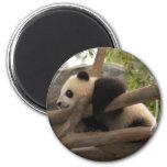 Panda Imán Para Frigorifico